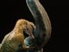 31033-allosaurus-vs-camarasaurus-015