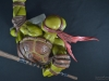leonardo_raphael_michelangelo_donatello_tmnt_teenage_mutant_ninja_turtles_comiquette_sideshow_collectibles_nickelodeon_toyreview-com_-br-86