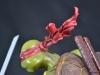 leonardo_raphael_michelangelo_donatello_tmnt_teenage_mutant_ninja_turtles_comiquette_sideshow_collectibles_nickelodeon_toyreview-com_-br-123