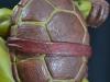 leonardo_raphael_michelangelo_donatello_tmnt_teenage_mutant_ninja_turtles_comiquette_sideshow_collectibles_nickelodeon_toyreview-com_-br-23