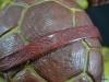 leonardo_raphael_michelangelo_donatello_tmnt_teenage_mutant_ninja_turtles_comiquette_sideshow_collectibles_nickelodeon_toyreview-com_-br-26