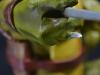 leonardo_raphael_michelangelo_donatello_tmnt_teenage_mutant_ninja_turtles_comiquette_sideshow_collectibles_nickelodeon_toyreview-com_-br-43