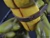 leonardo_raphael_michelangelo_donatello_tmnt_teenage_mutant_ninja_turtles_comiquette_sideshow_collectibles_nickelodeon_toyreview-com_-br-62