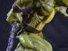 leonardo_raphael_michelangelo_donatello_tmnt_teenage_mutant_ninja_turtles_comiquette_sideshow_collectibles_nickelodeon_toyreview-com_-br-82