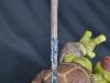 leonardo_raphael_michelangelo_donatello_tmnt_teenage_mutant_ninja_turtles_comiquette_sideshow_collectibles_nickelodeon_toyreview-com_-br-84